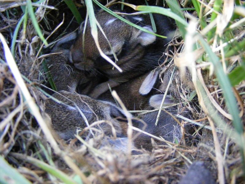 tgg_bunnies03